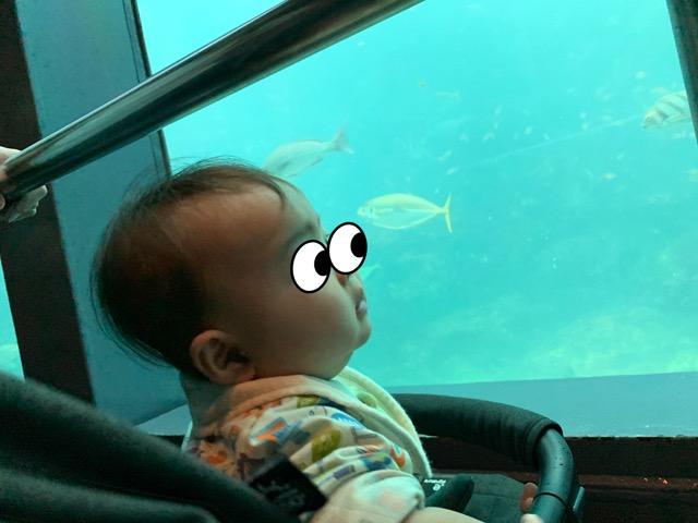 水族館に連れて行った赤ちゃん