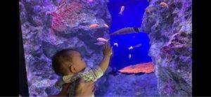 魚に釘付けの赤ちゃん